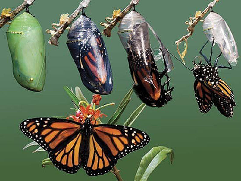 butterfly-image-1
