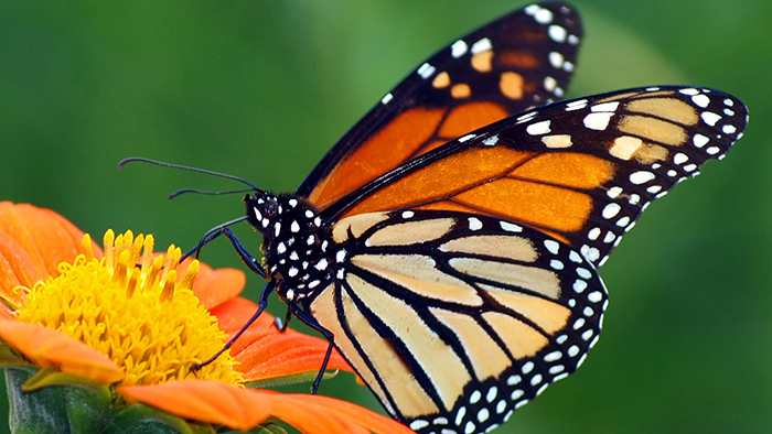 butterfly-image-2